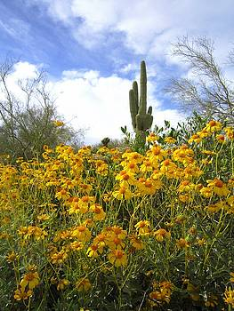 Arizona Postcard by Nelson and Cheryl Strong