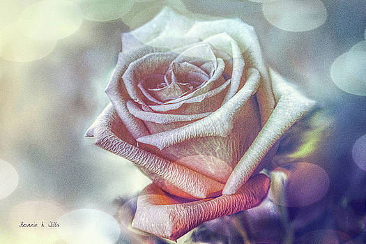 Aromatic Rose by Bonnie Willis