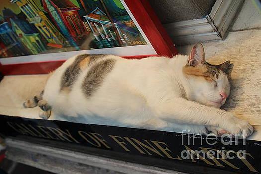 Chuck Kuhn - Art Gallery Cat sleeping