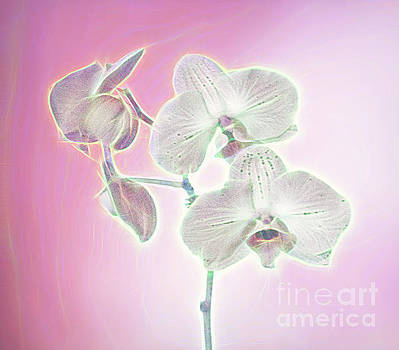 Artistic Group of Orchids by Linda Phelps