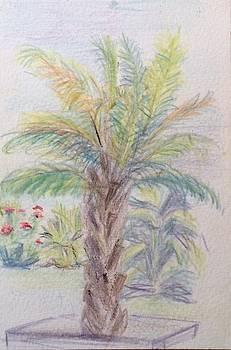 Aruba Palm Tree by Katherine  Berlin