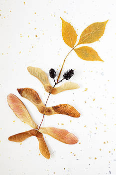 Ash Leaves and Seeds by Bernice Williams