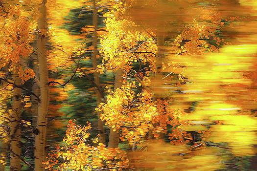 Aspen Abstract by Steven Bateson