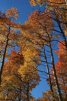 Aspen Glow by Patty Plummer