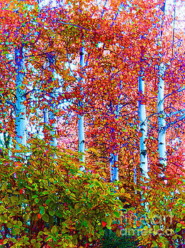 Aspen Grove In Summer by Ann Johndro-Collins