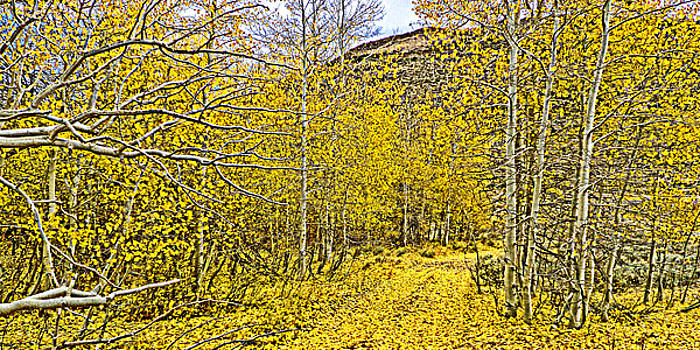 Aspen Leaf Road by L J Oakes