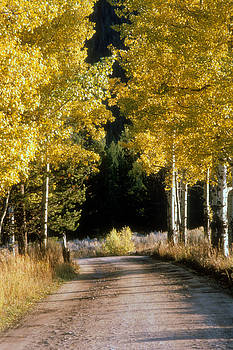 Aspen Road by Gerard Fritz