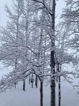 Aspen Snow by Shawn Hughes