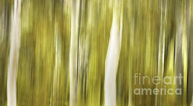 Aspens and Golden Foliage abstract by Thomas Schoeller