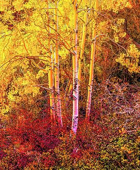 Aspens In Autumn-2 by Nancy Marie Ricketts