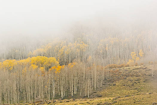 Aspens in the Clouds by Peter J Sucy