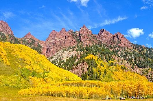 Aspens In The Fall by Susan Ince