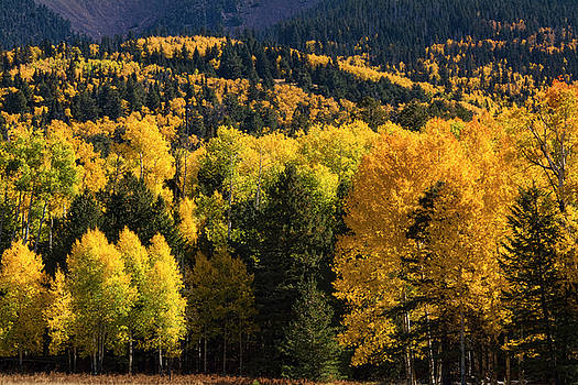 Aspens on the Hill  by Saija Lehtonen