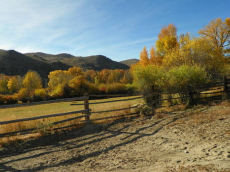 At Herring's Ranch by Lenore Senior