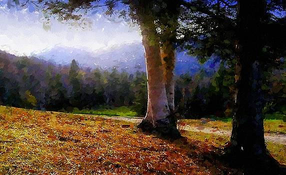 Ausable Club Birches by Linda Seifried