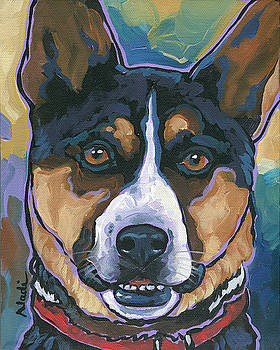 Australian Cattle Dog by Nadi Spencer