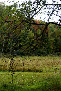 Linda Knorr Shafer - Autumn - 1