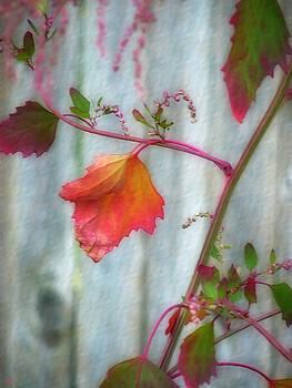 Autumn 7 by Jeff Breiman