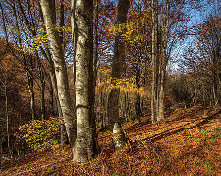 Autumn afternoon in forest by Davorin Mance