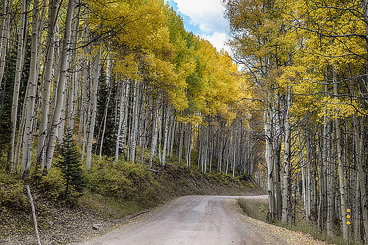James BO  Insogna - Autumn Aspen Tree Lined Rocky Mountain Road