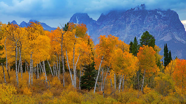 Autumn Aspens Below Mount Moran by Joseph Rossbach