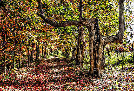 Autumn at Odiorne Point NH by Deena Athans