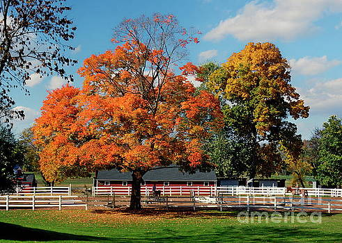 Autumn at the Horse Barn by Marcel  J Goetz  Sr