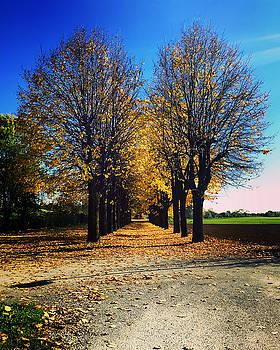 Autumn Avenue by Niki Mastromonaco