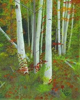 Autumn Birches by Laurel Ellis