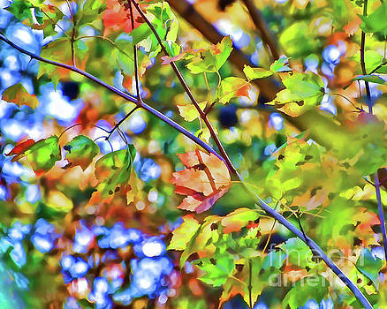 Autumn Bokeh by Kerri Farley