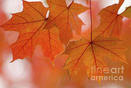 Autumn Bokeh by Nick Boren
