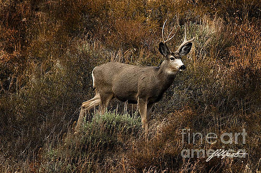 Autumn Buck by Jim Fillpot
