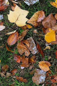 Autumn Carpet 001 by Dorin Adrian Berbier