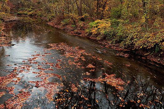 Autumn Carpet 003 by Dorin Adrian Berbier