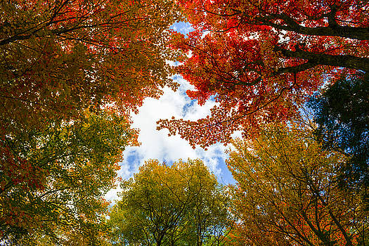 Autumn Color by Alex Land