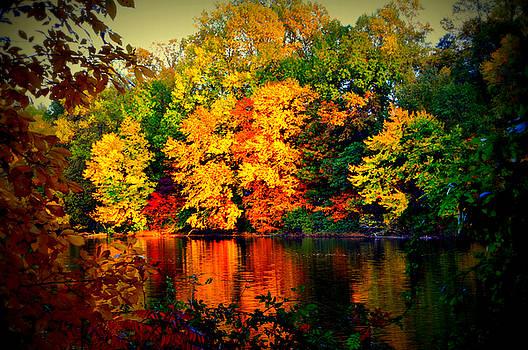Autumn Colors 2015-2 by Aron Chervin