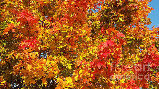 Autumn Colouring by Alex Cassels
