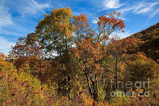 Autumn colours at Swift Run Overlook on Skyline Drive by Louise Heusinkveld