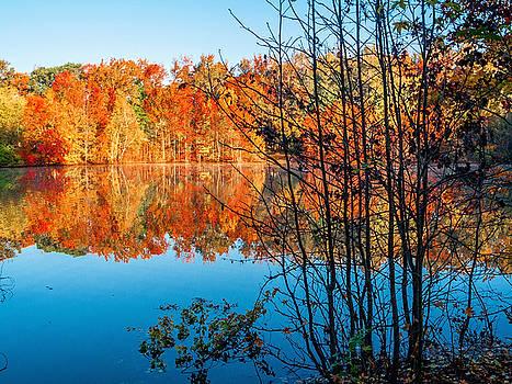 Autumn Contrast by Andrew Kazmierski