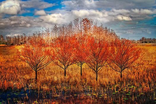 Debra and Dave Vanderlaan - Autumn Cypress