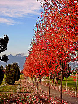 Autumn Delight, Vancouver by Brian Chase