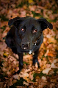 Adam Romanowicz - Autumn Dog