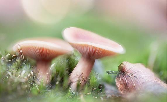 Autumn dream by Dirk Ercken