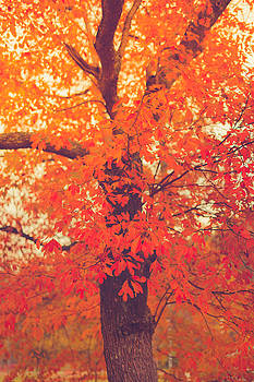 Autumn Flame by Shane Holsclaw