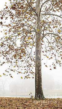 Autumn Fog by Tamara Becker