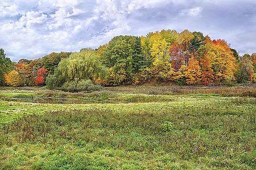 Autumn Foliage by Kathi Mirto
