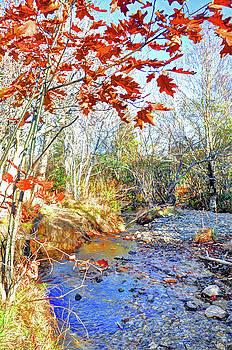 Autumn Foliage  by Savannah Gibbs