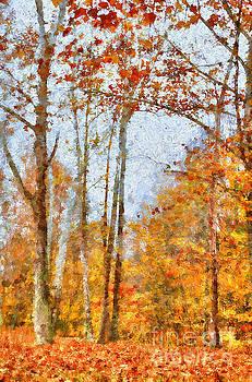 Autumn Forest by Darren Fisher