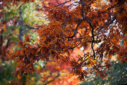 Autumn Fury by Jane Melgaard