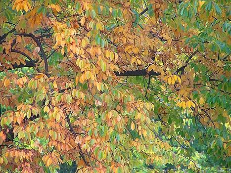 Autumn Garmony by Oleg Zavarzin